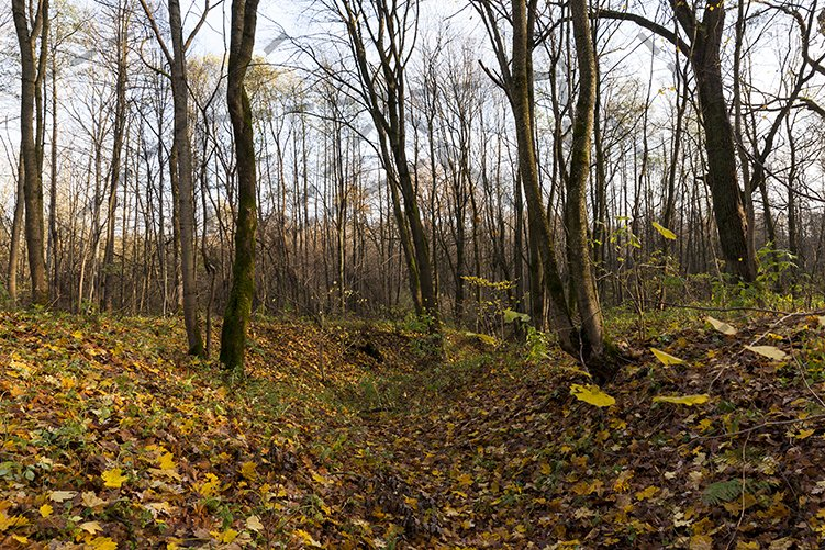 autumn forest example image 1