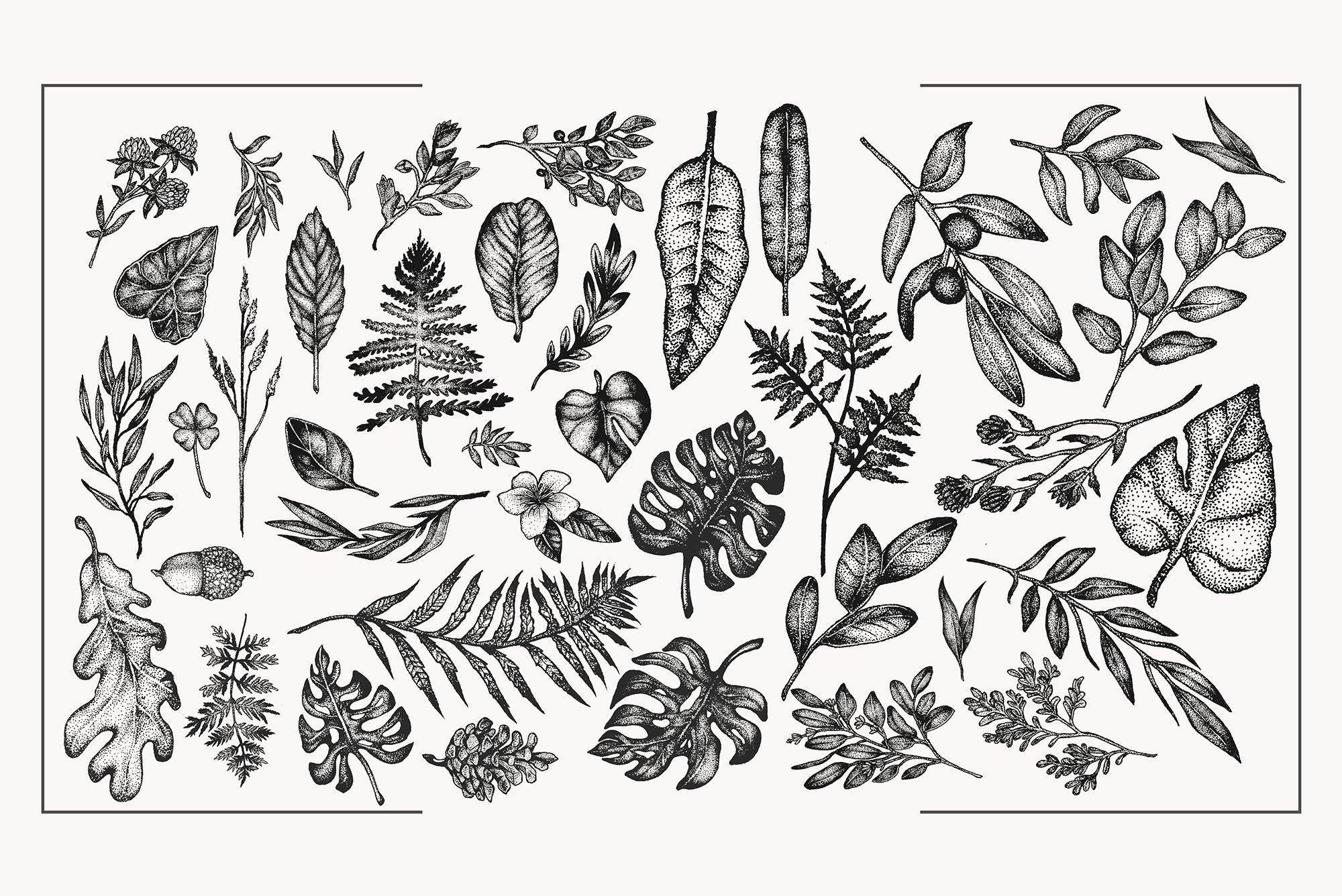 Botanical Vector Illustration Set example image 6