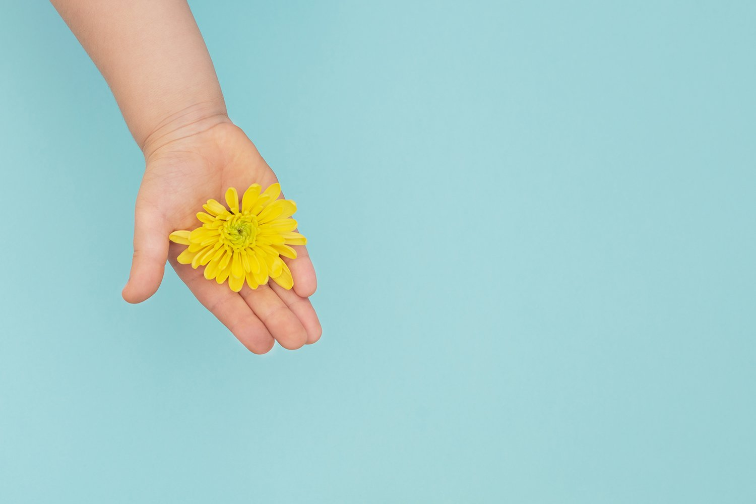 The yellow flower in childs hands on blue background. example image 1