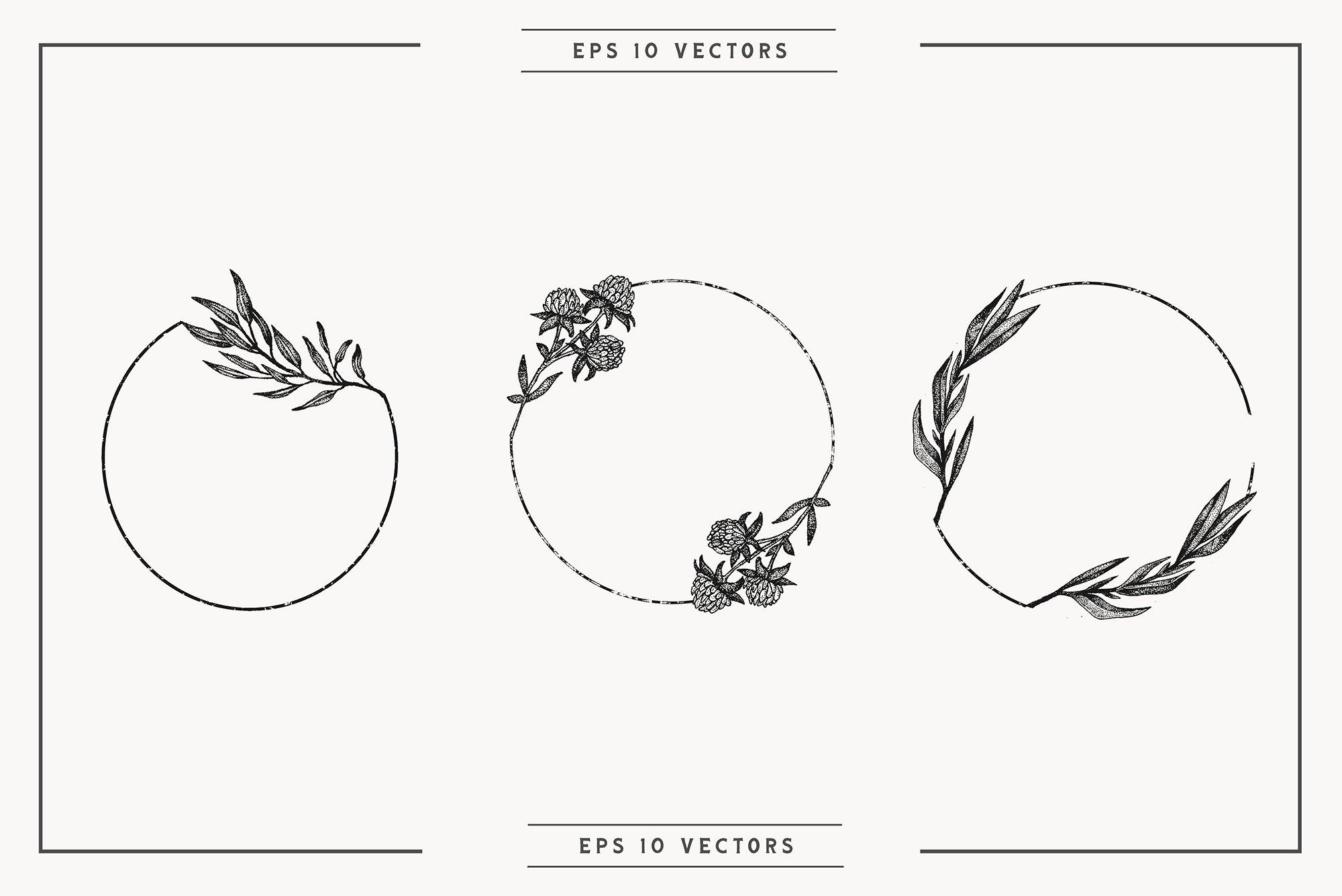 Botanical Vector Illustration Set example image 4