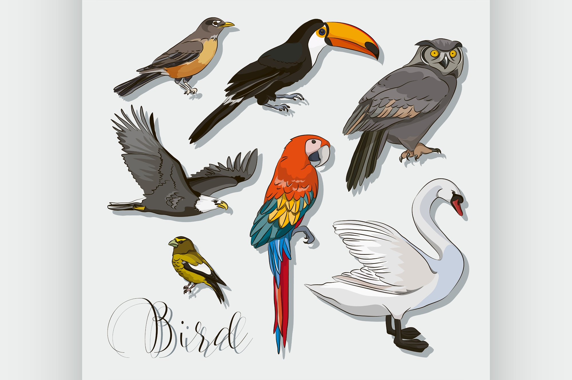Bird collection set example image 1