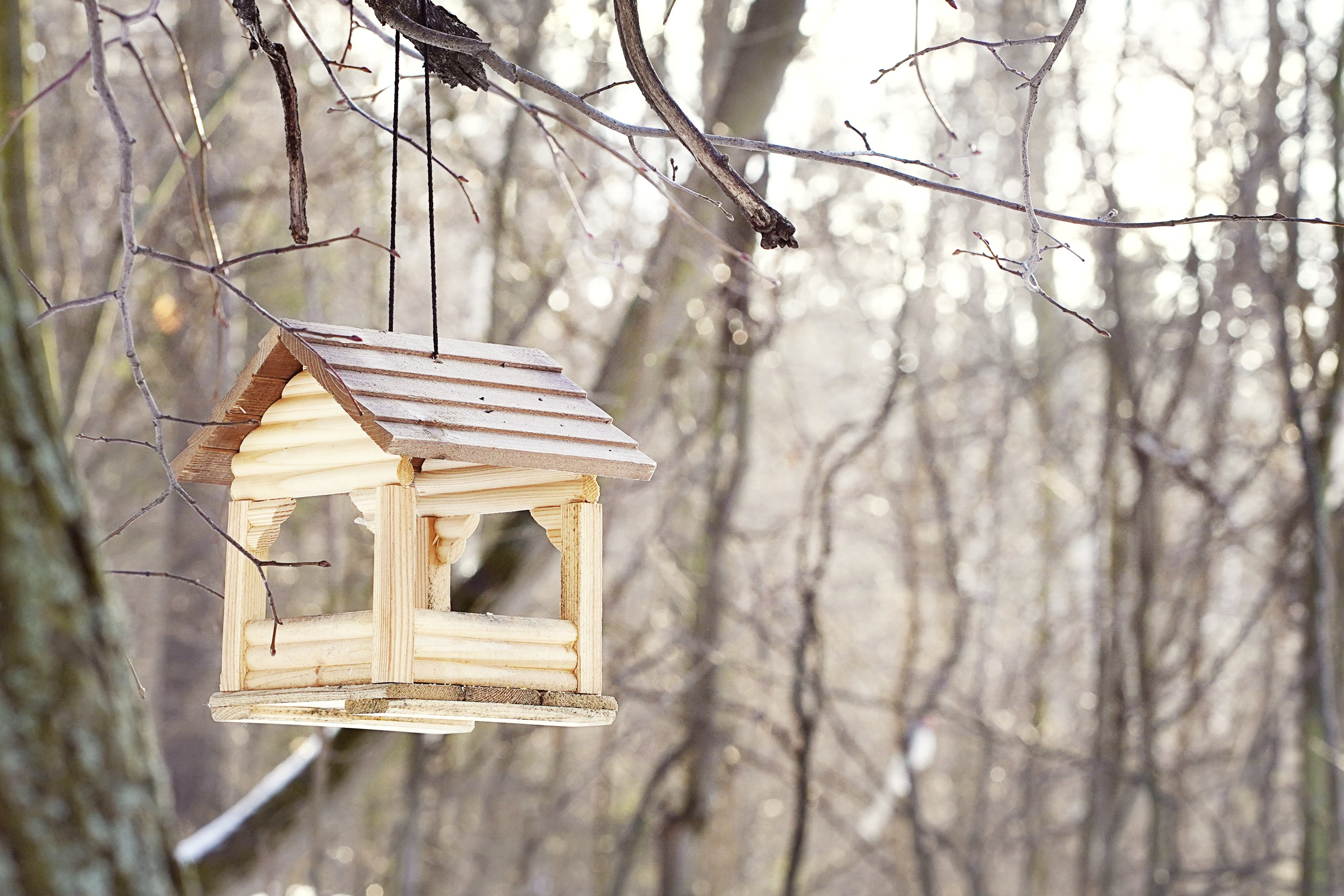 Wooden birdhouse in the forest in early spring. example image 1