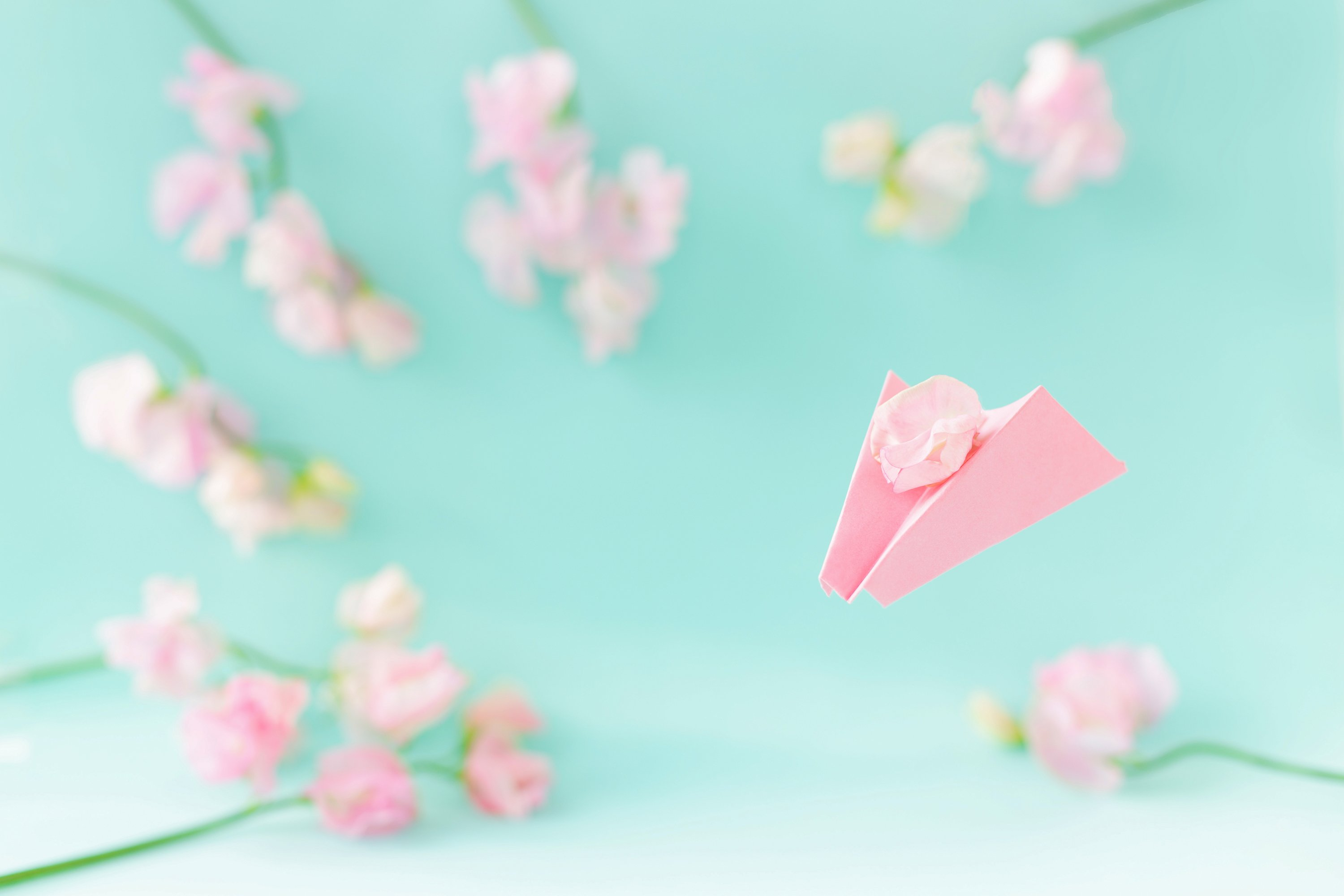 Paper airplane,pink sweet peas Lathyrus flowers.Blue colour example image 1