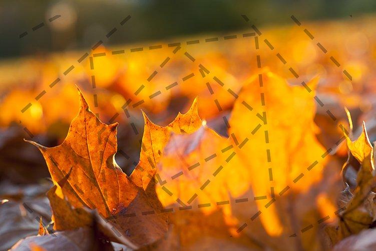 autumn sun shines example image 1