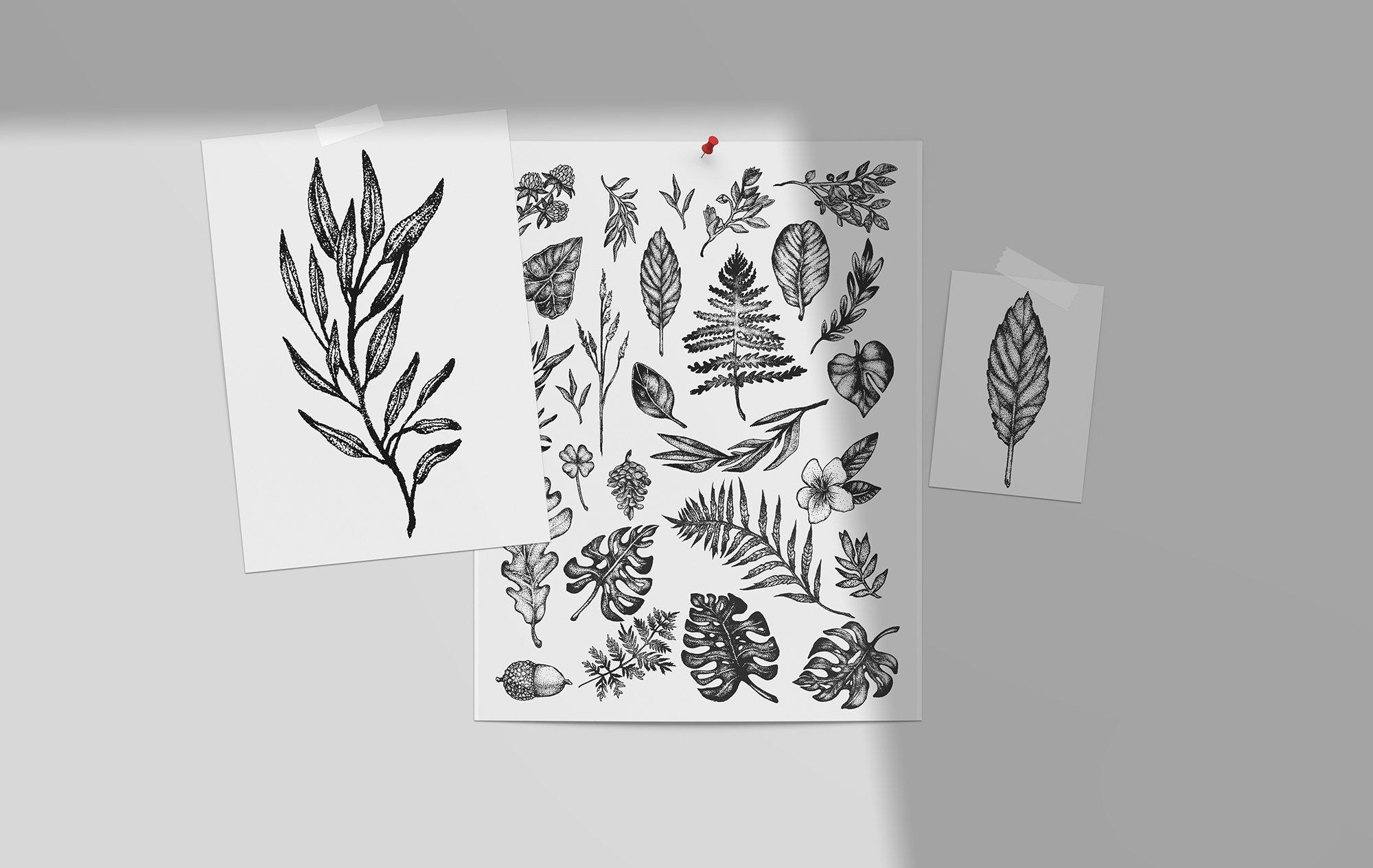 Botanical Vector Illustration Set example image 5