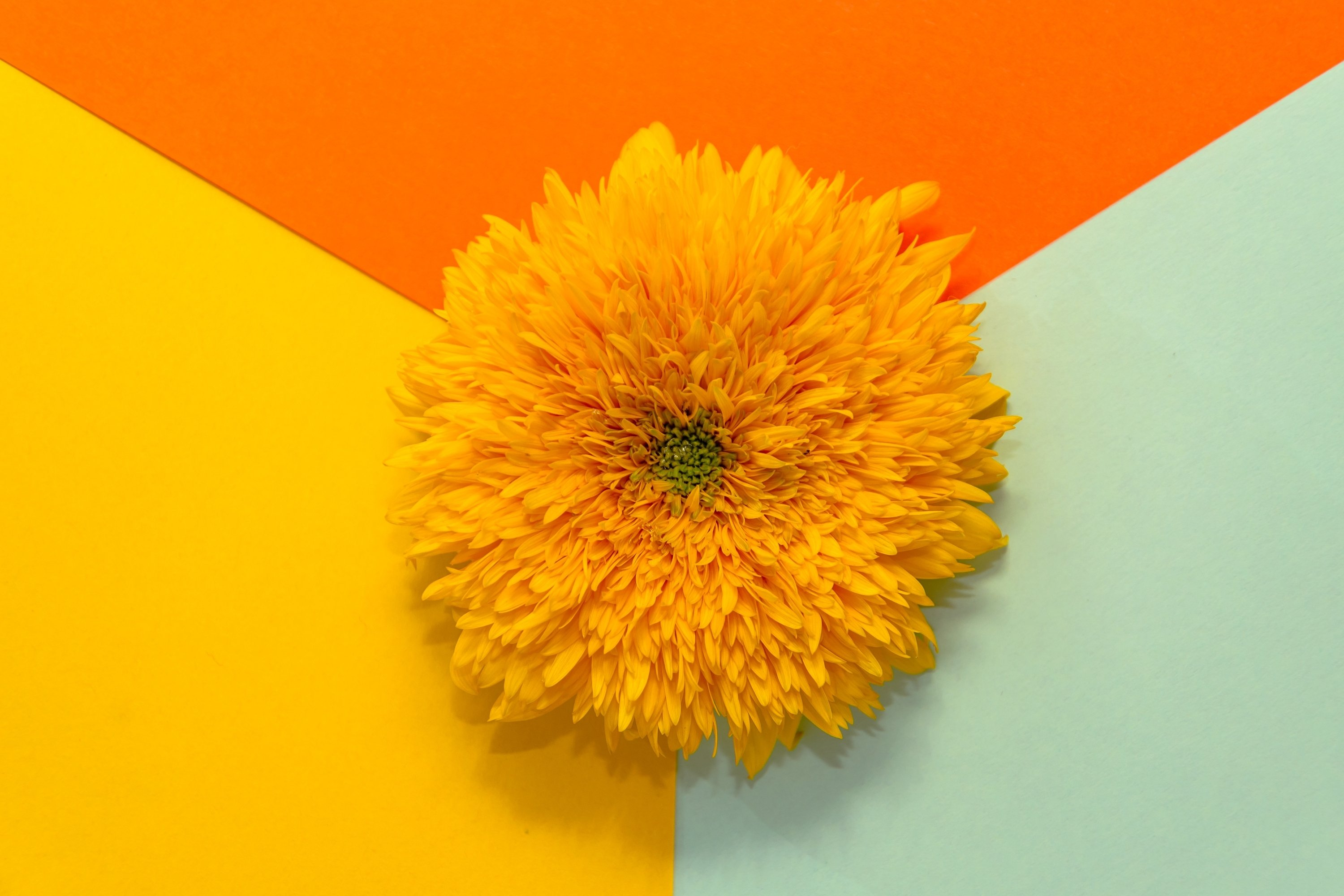 Yellow flower on multicolored background. Geometric flat lay example image 1