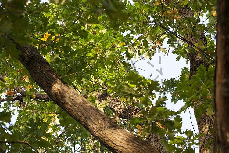 foliage of the oak example image 1