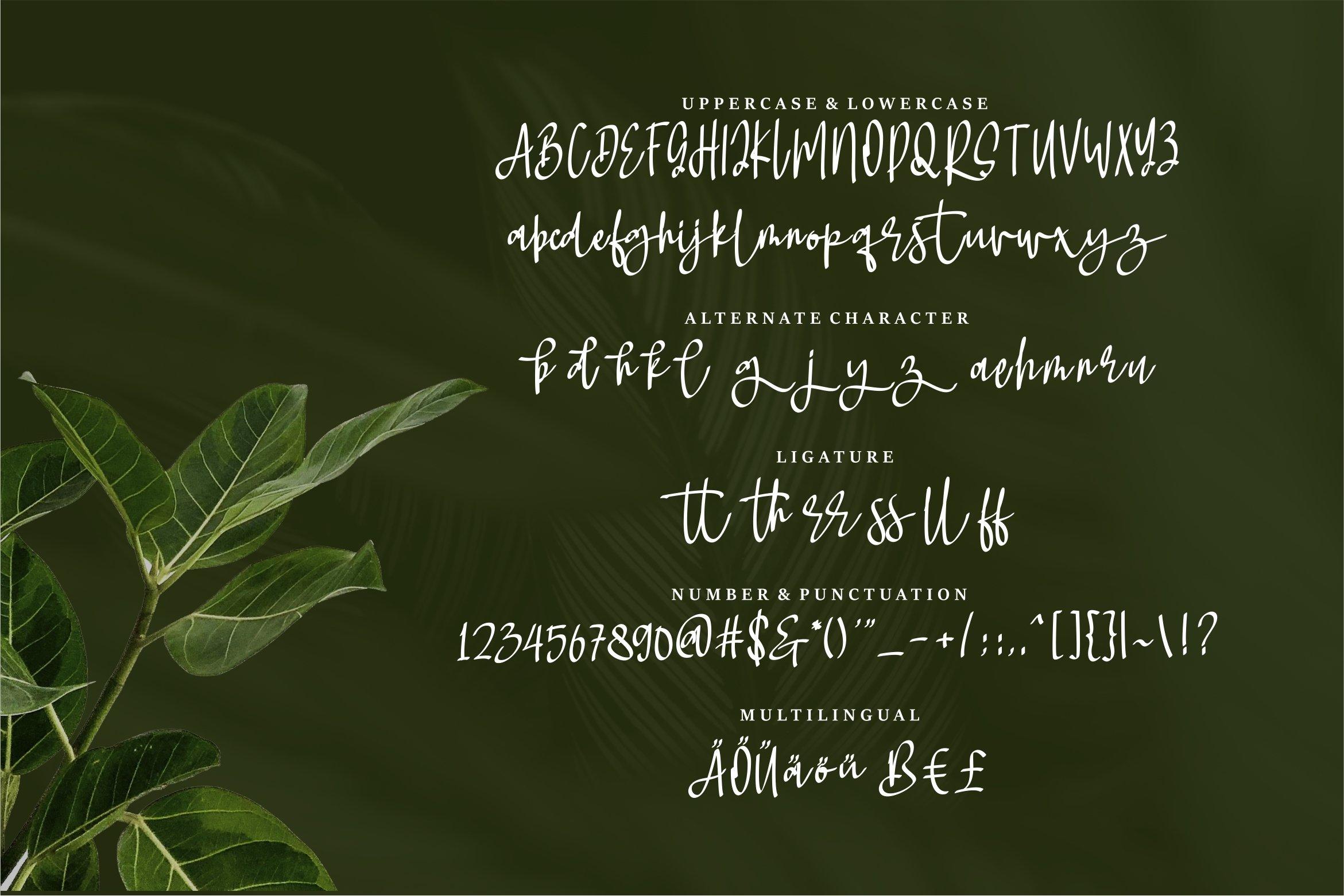 Rindyani - A Beauty Script Font example image 4