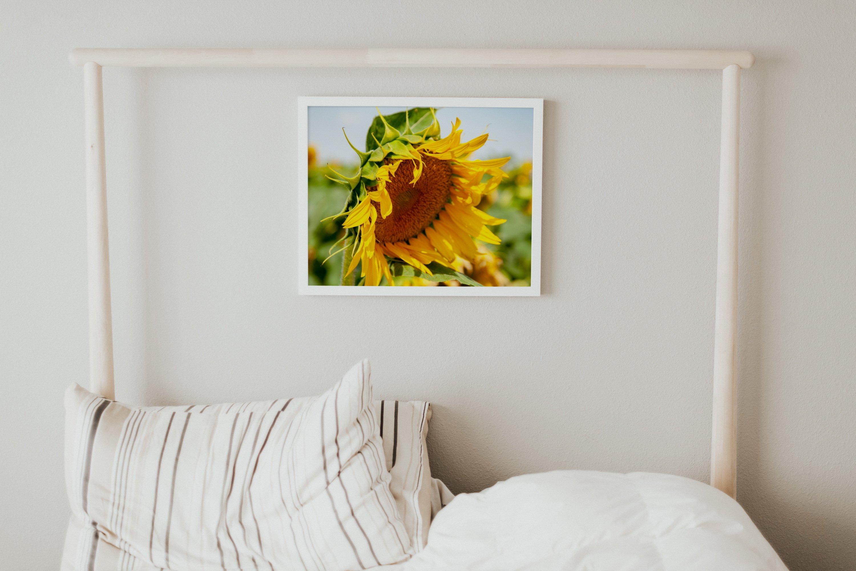 26 Sunflower Summer Photo Backgrounds example image 9