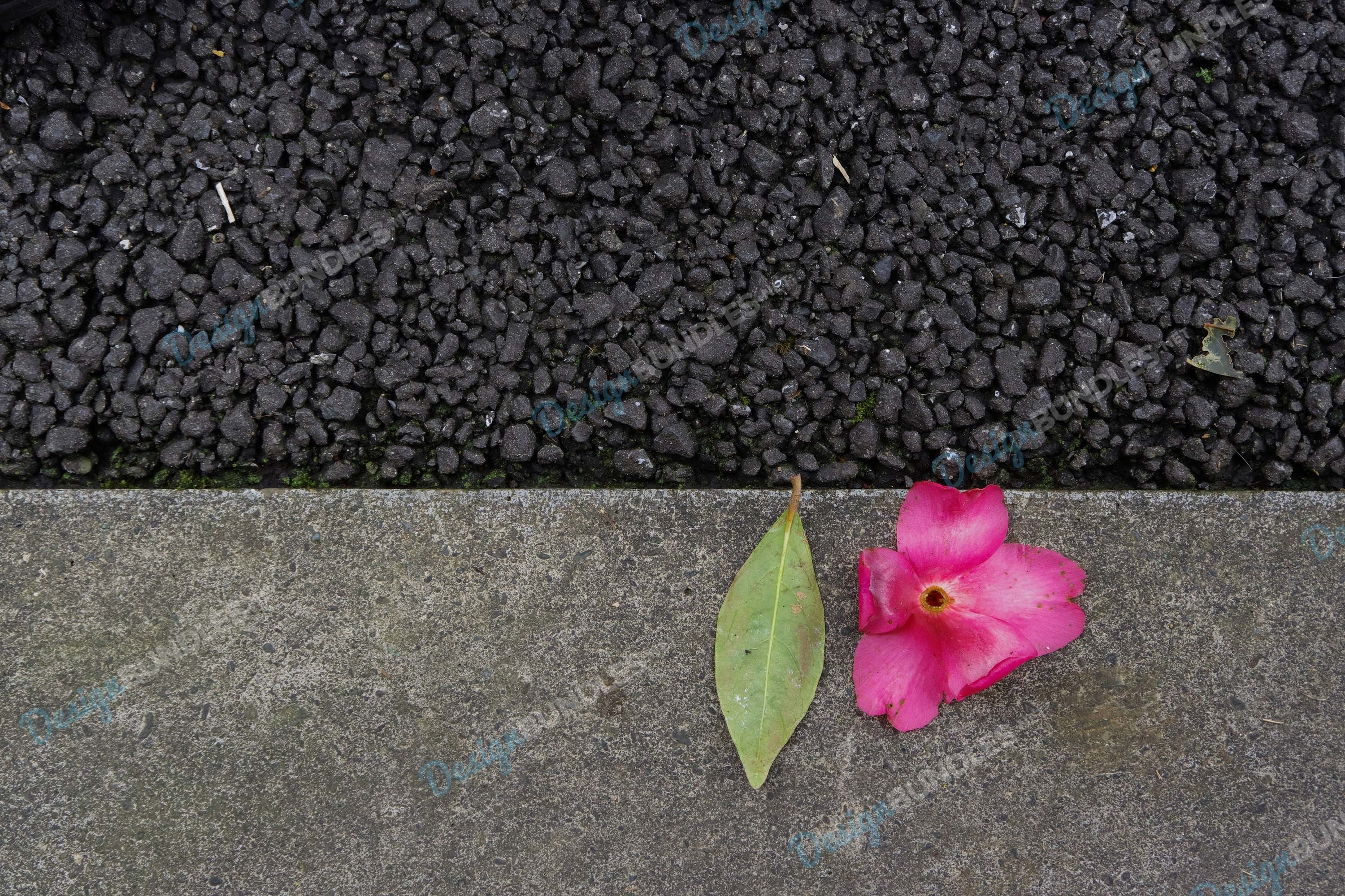 Stock Photo - Close-Up Of Pink Rose Flowers on the floor example image 1