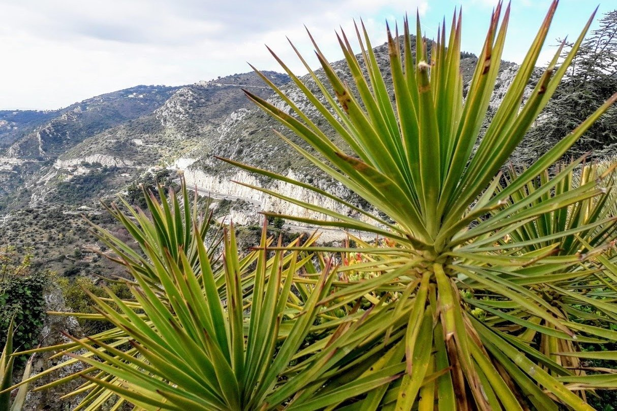 Mountains photos Palm Trees in Eze France example image 1