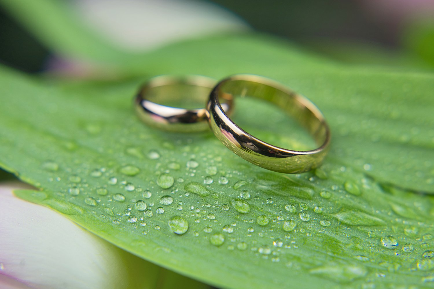 wedding gold rings on a green leaf plant example image 1