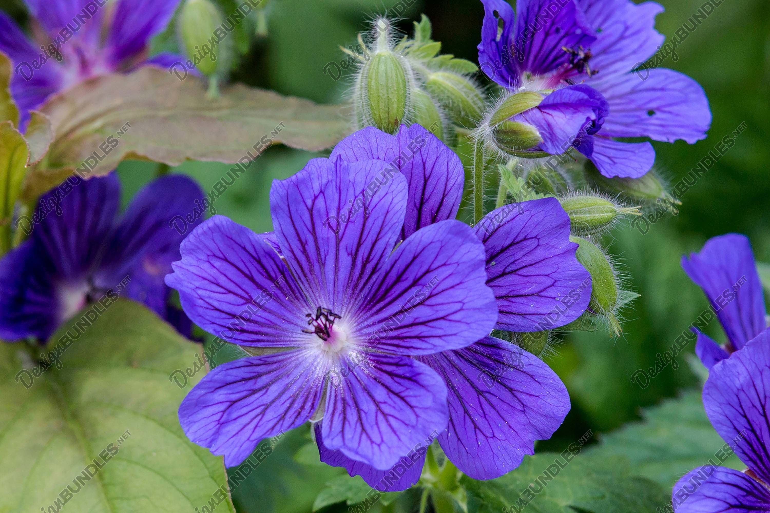 Stock Photo - Close-Up Of Purple Flowering Plants example image 1