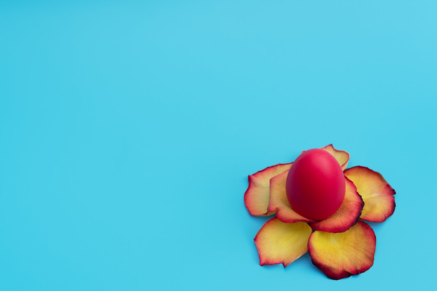 Red Easter egg stands in yellow flower made of rose petals example image 1