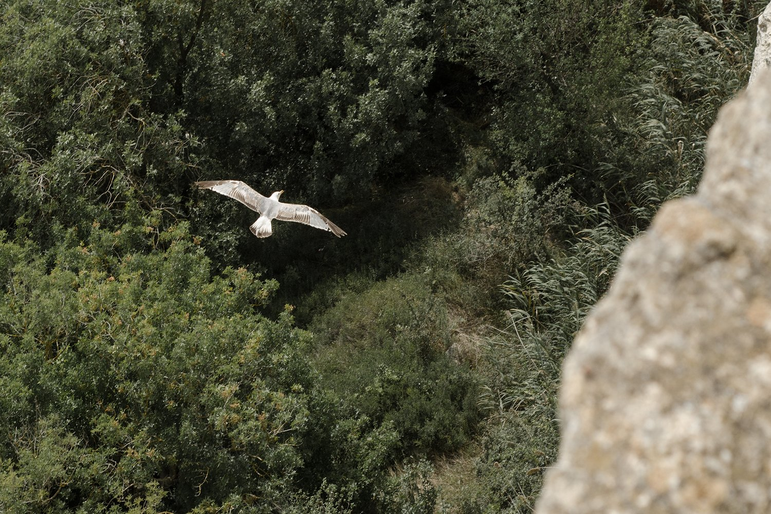 Seagull on a green background. nature. example image 1