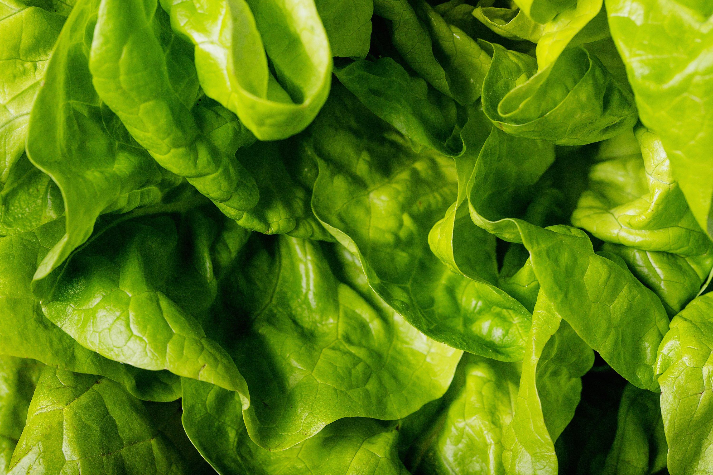 Fresh lettuce example image 1
