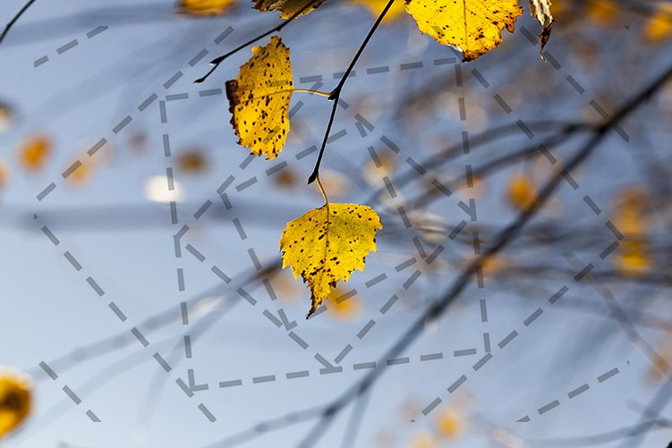 yellow birch leaves example image 1