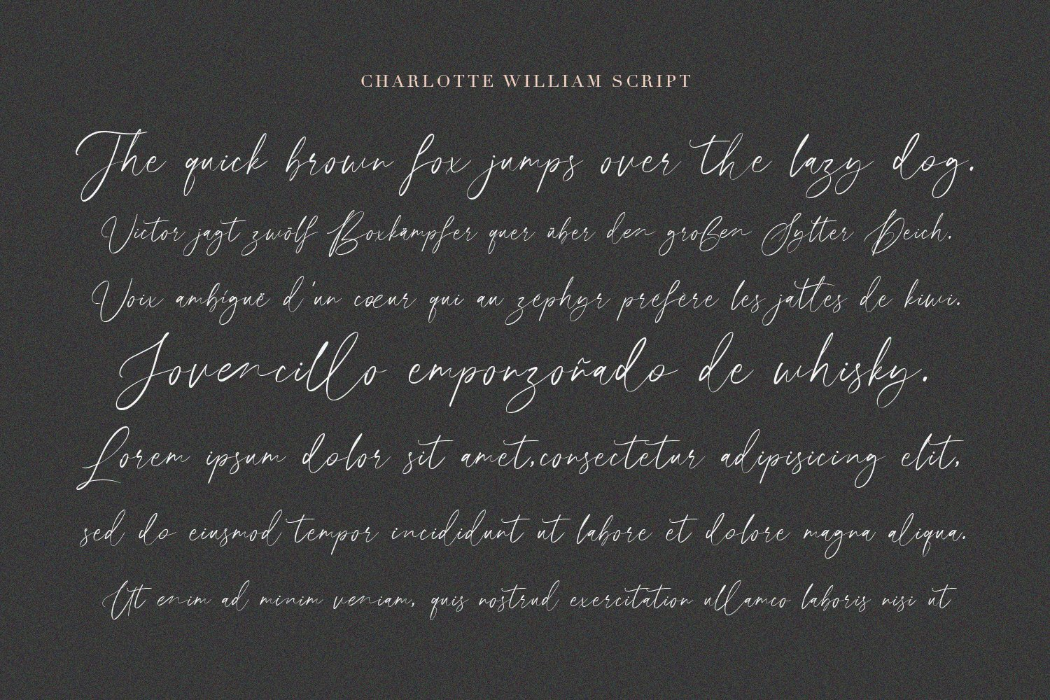 Charlotte William Font Duet example image 4