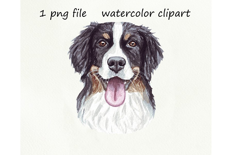 Watercolor dog png, Bernese Mountain Dog, hand drawn example image 1
