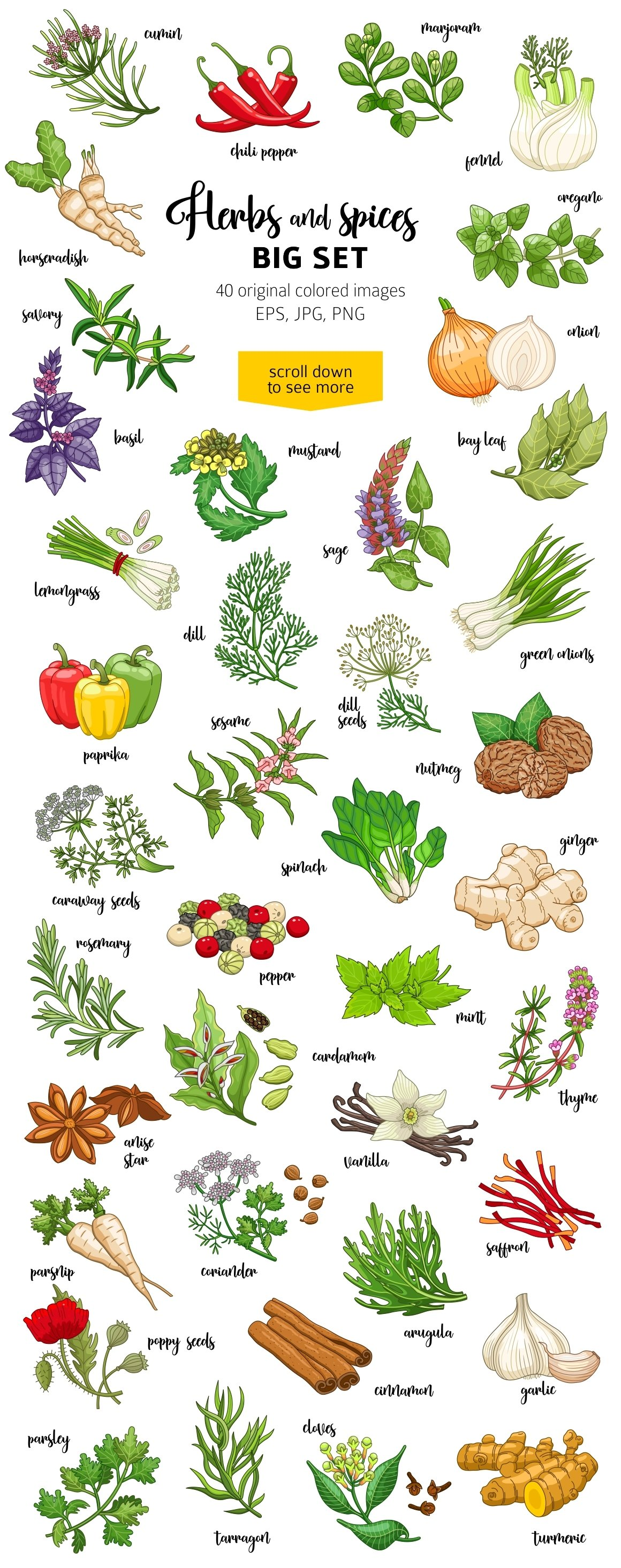 40 colored spices and herbs example image 2