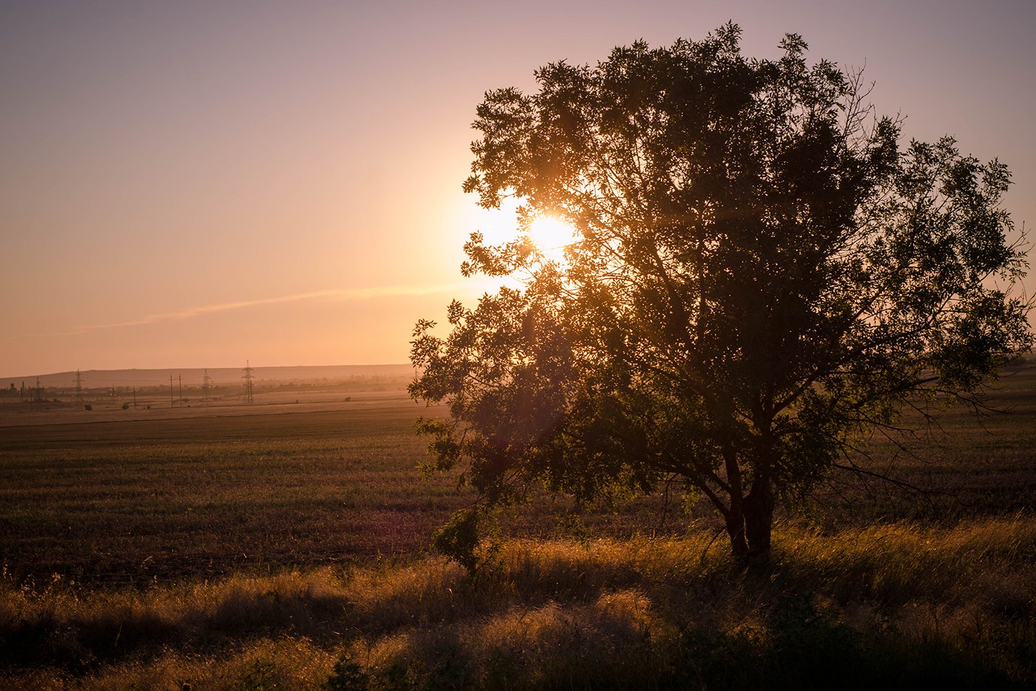 Tree at sunset. Nature. Landscape. example image 1