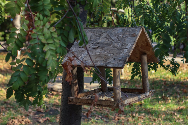 bird feeder on a tree example image 1