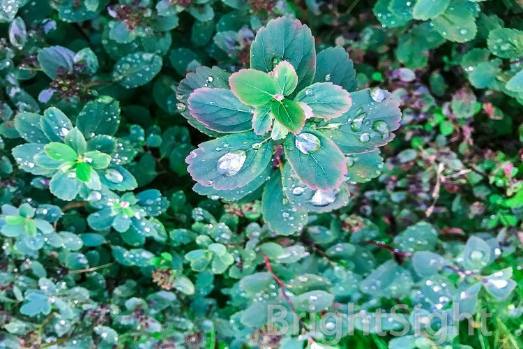 Green bush with rain droplets example image 1