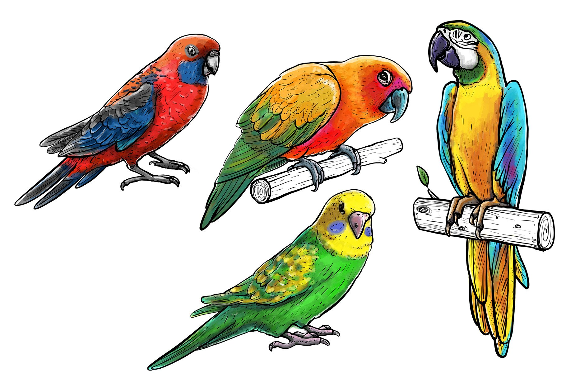 Drawn parrots example image 4