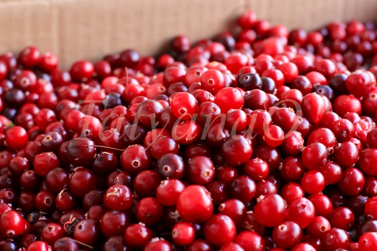 Cranberries background example image 1