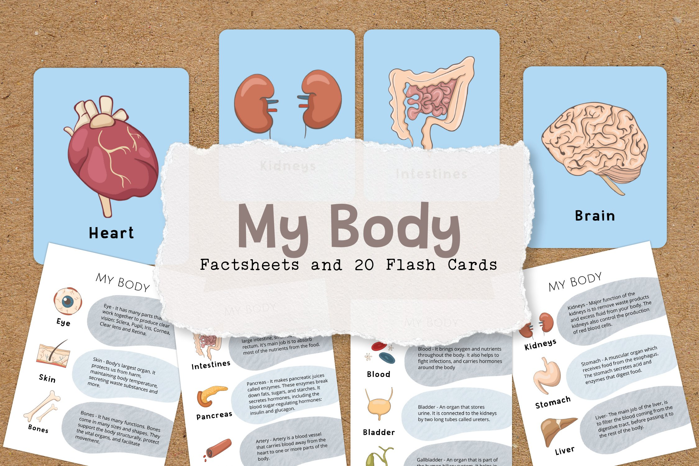 My Body Educational Fact Sheets and Flash Cards example image 1