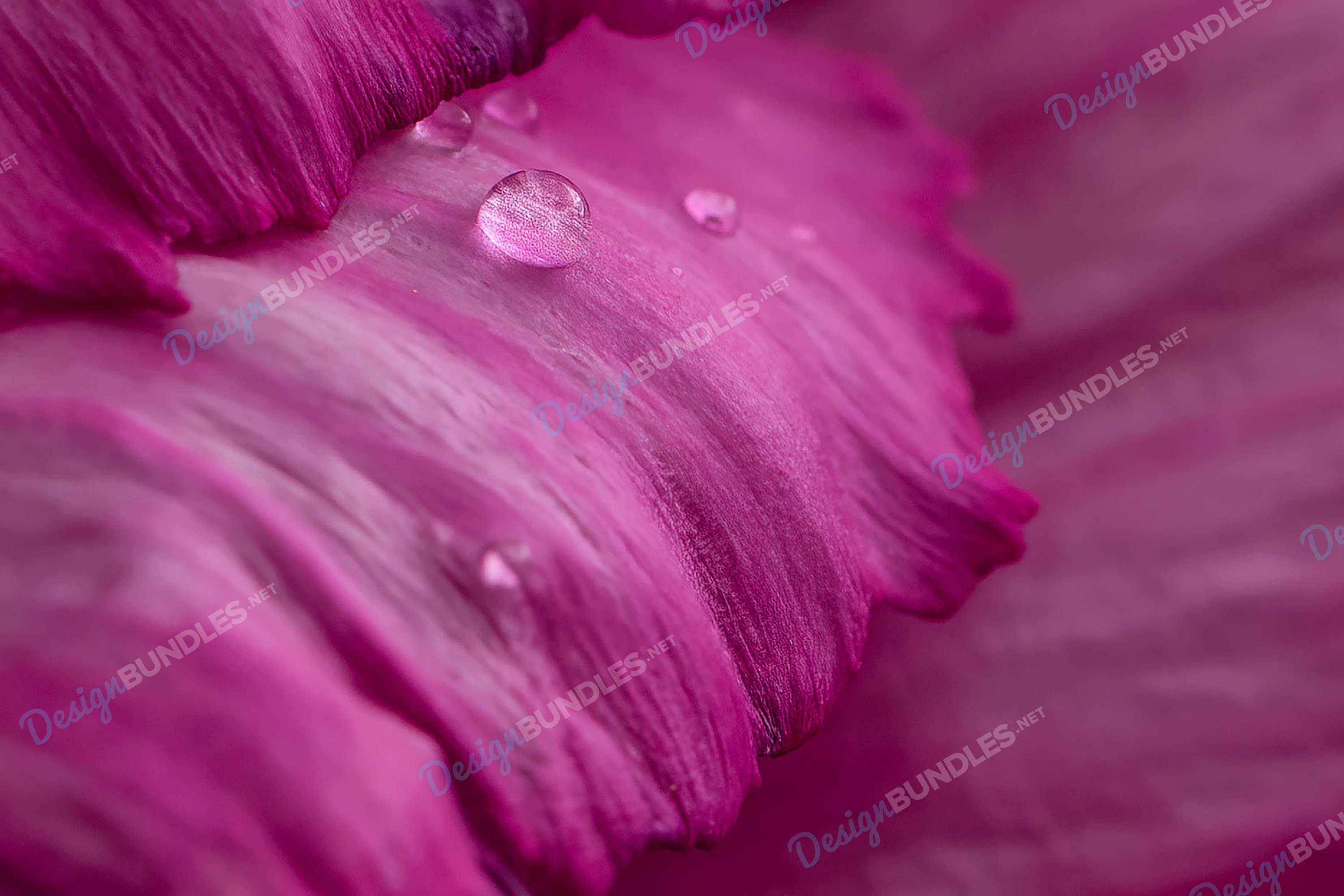 Stock Photo - Close-Up Of Fresh Flower With Raindrops example image 1
