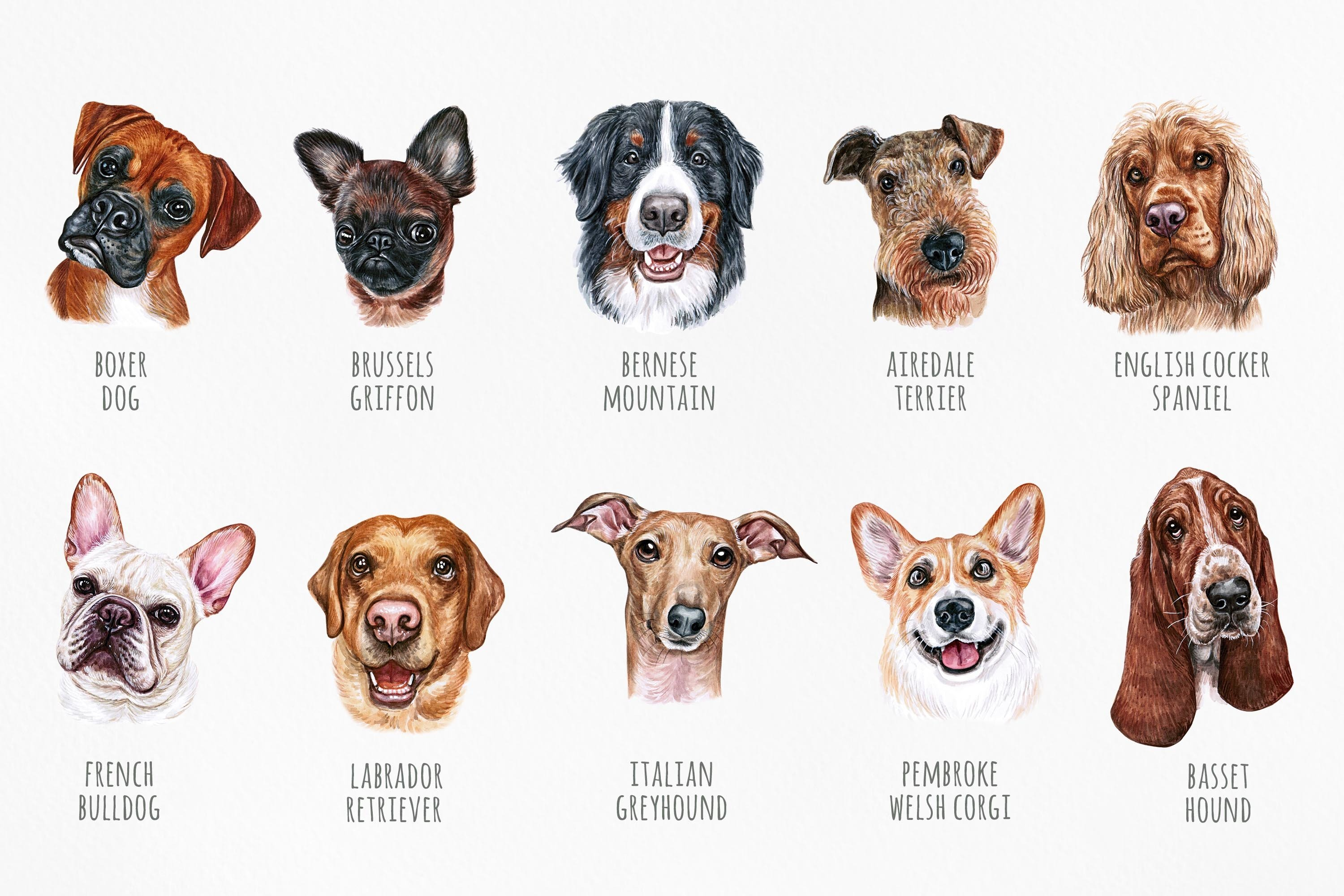 PART 1. Watercolor illustration set DOG breeds. Cute 20 dogs example image 2