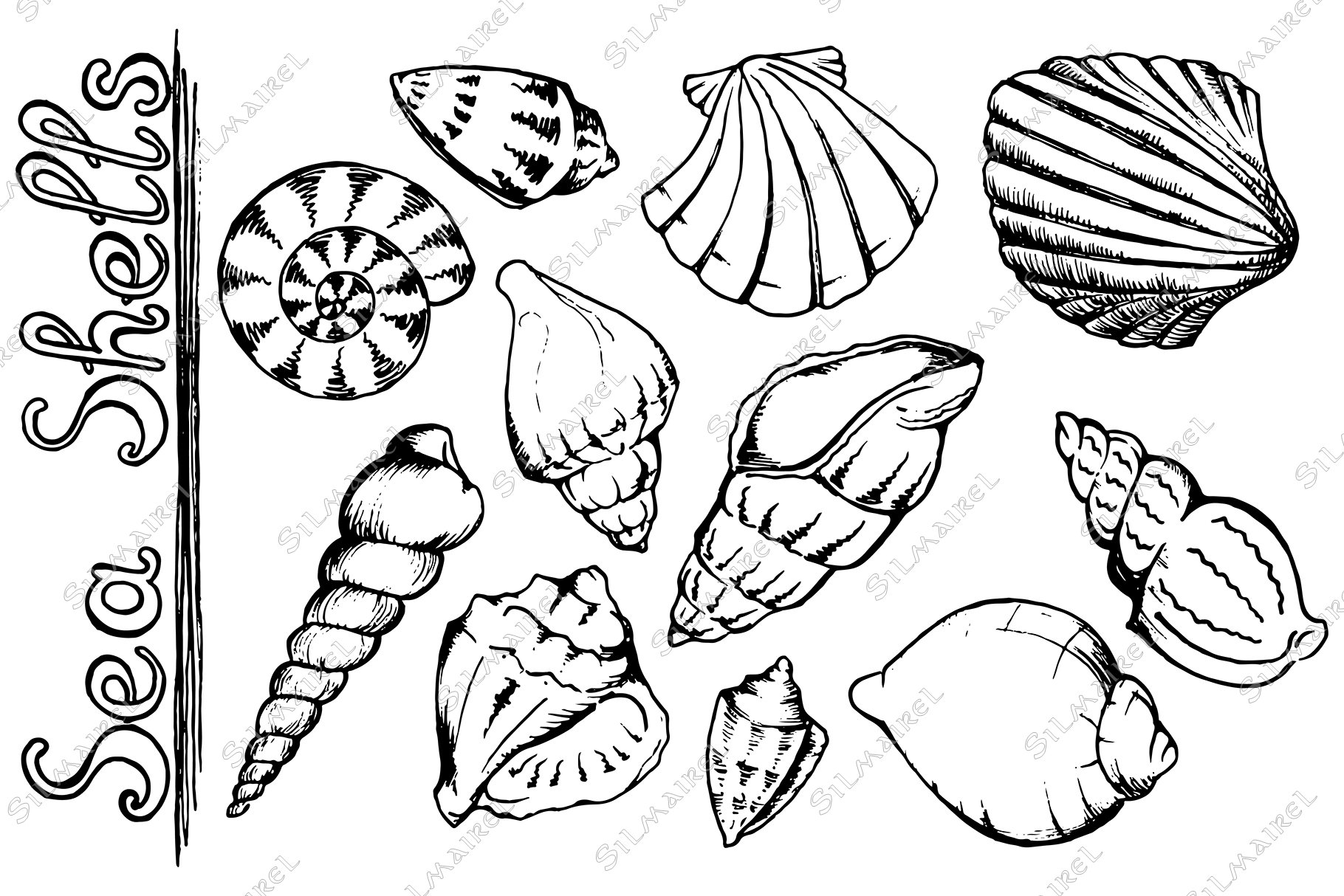Seashell ink set vector example image 2