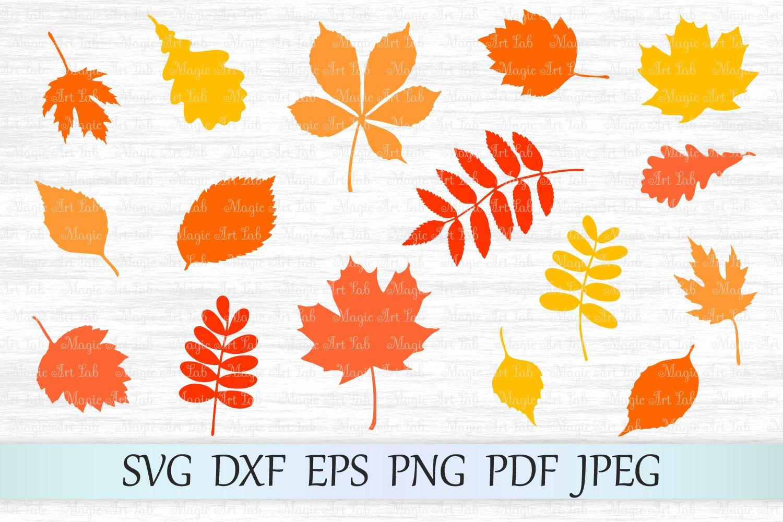 Fall Leaf Svg Autumn Leaves Svg File Fall Svg Maple Leaf 379484 Svgs Design Bundles