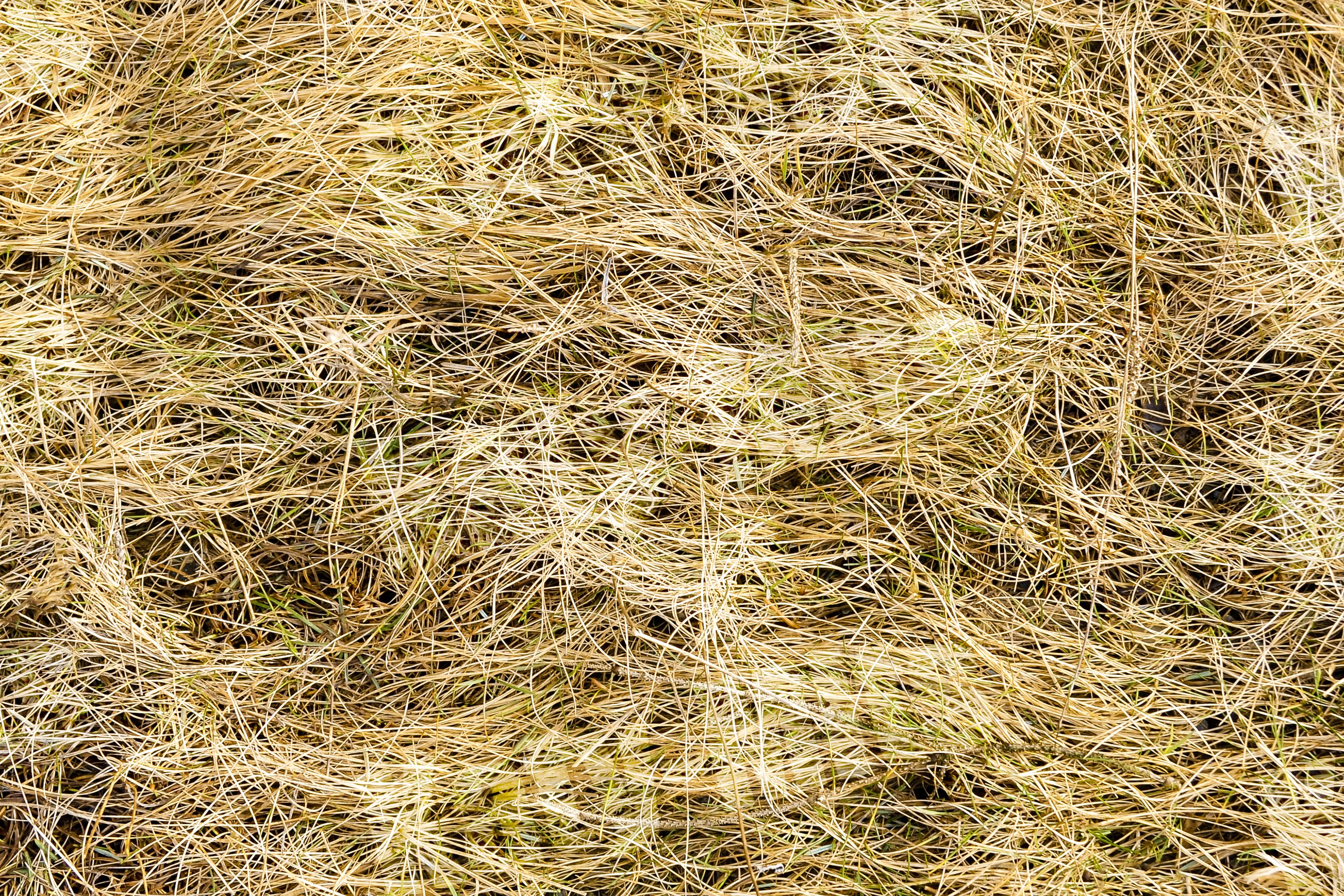 Straw texture background example image 1