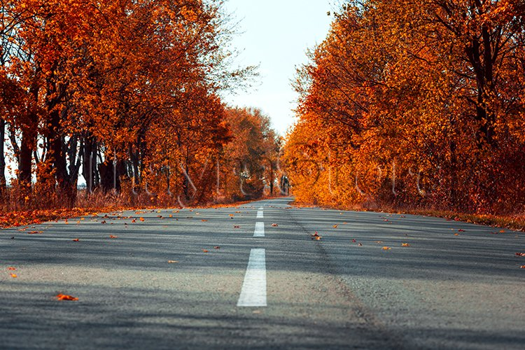 Empty asphalt road in autumn fall forest example image 1