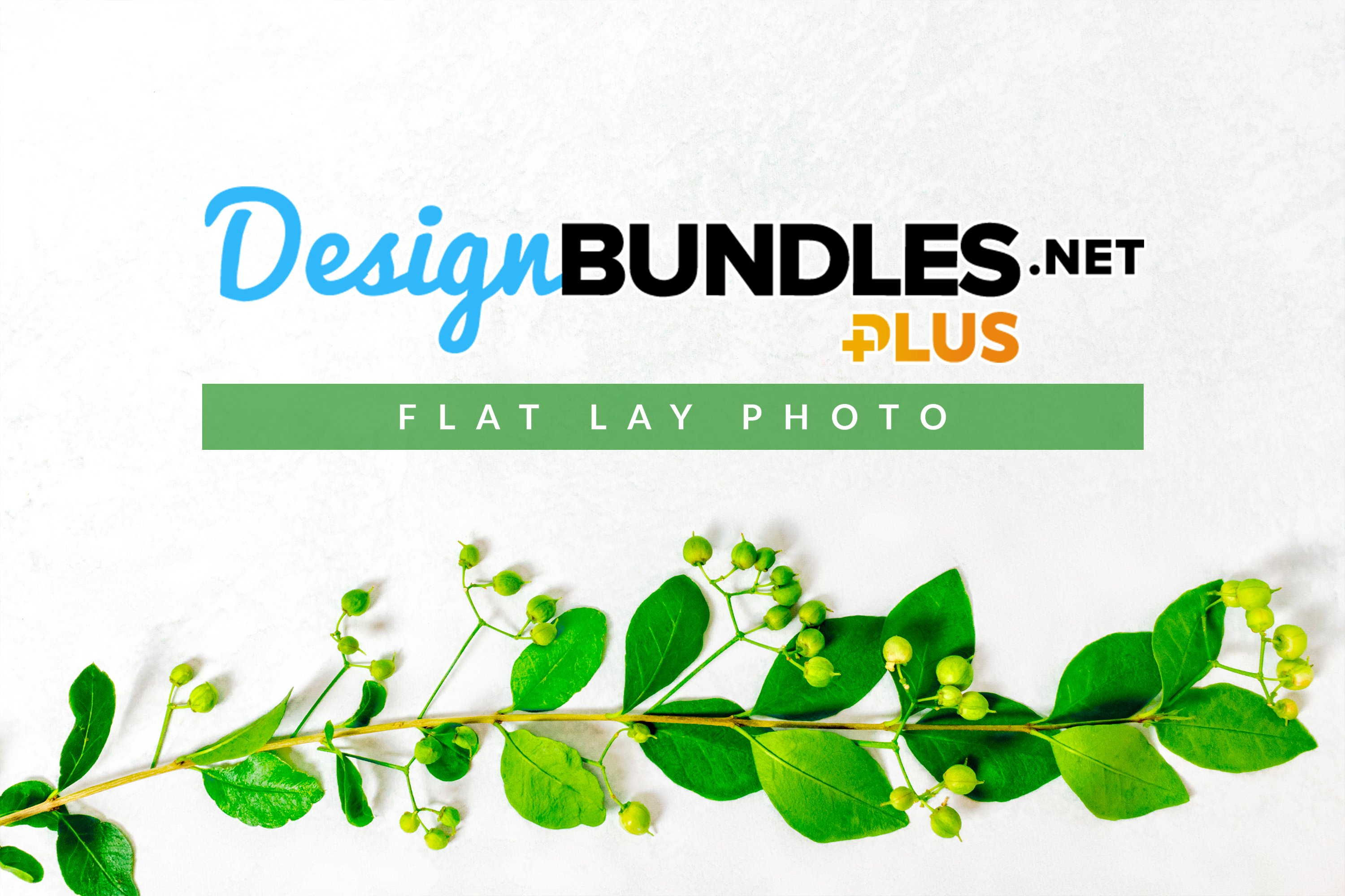 Leaves and Green Berries | Flat Lay Photo example image 1