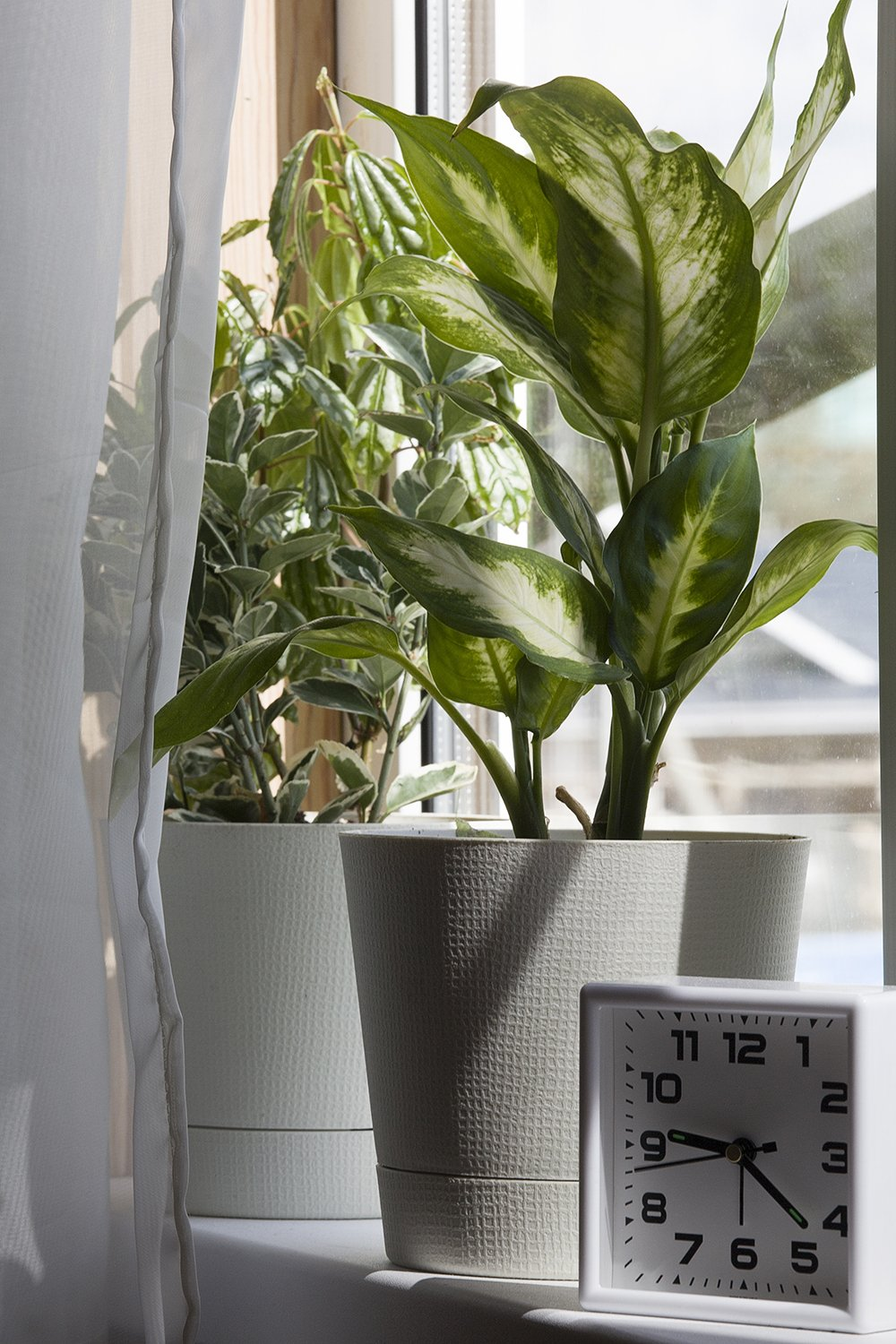 houseplants in white flower pot and clock near the window example image 2