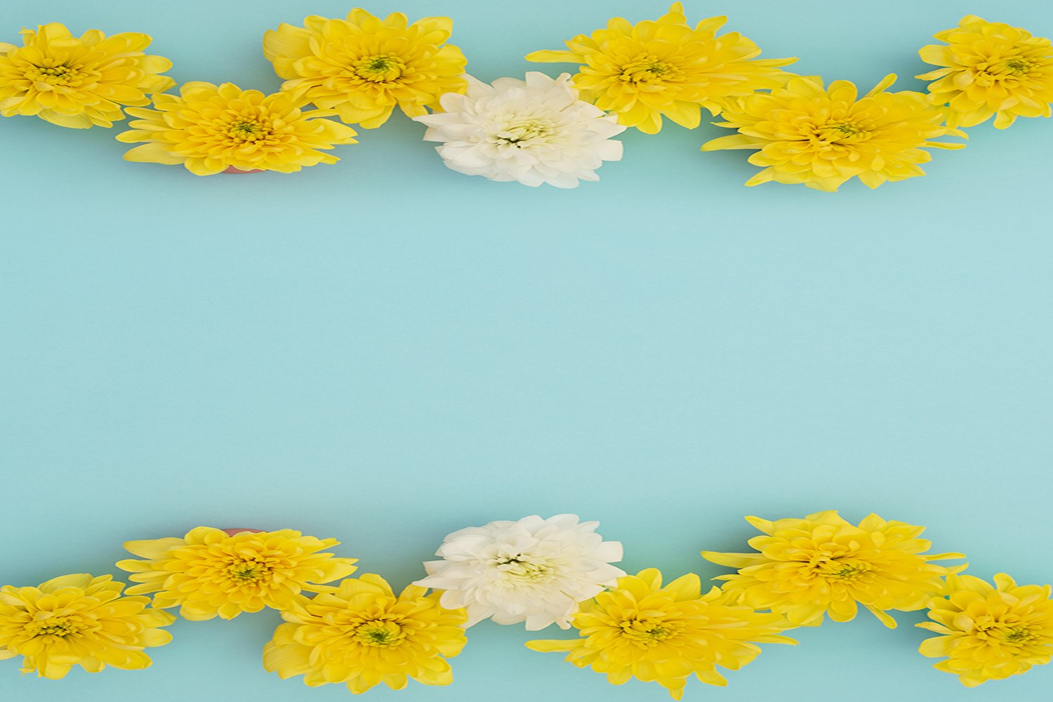 Yellow and white flowers on blue background. example image 1