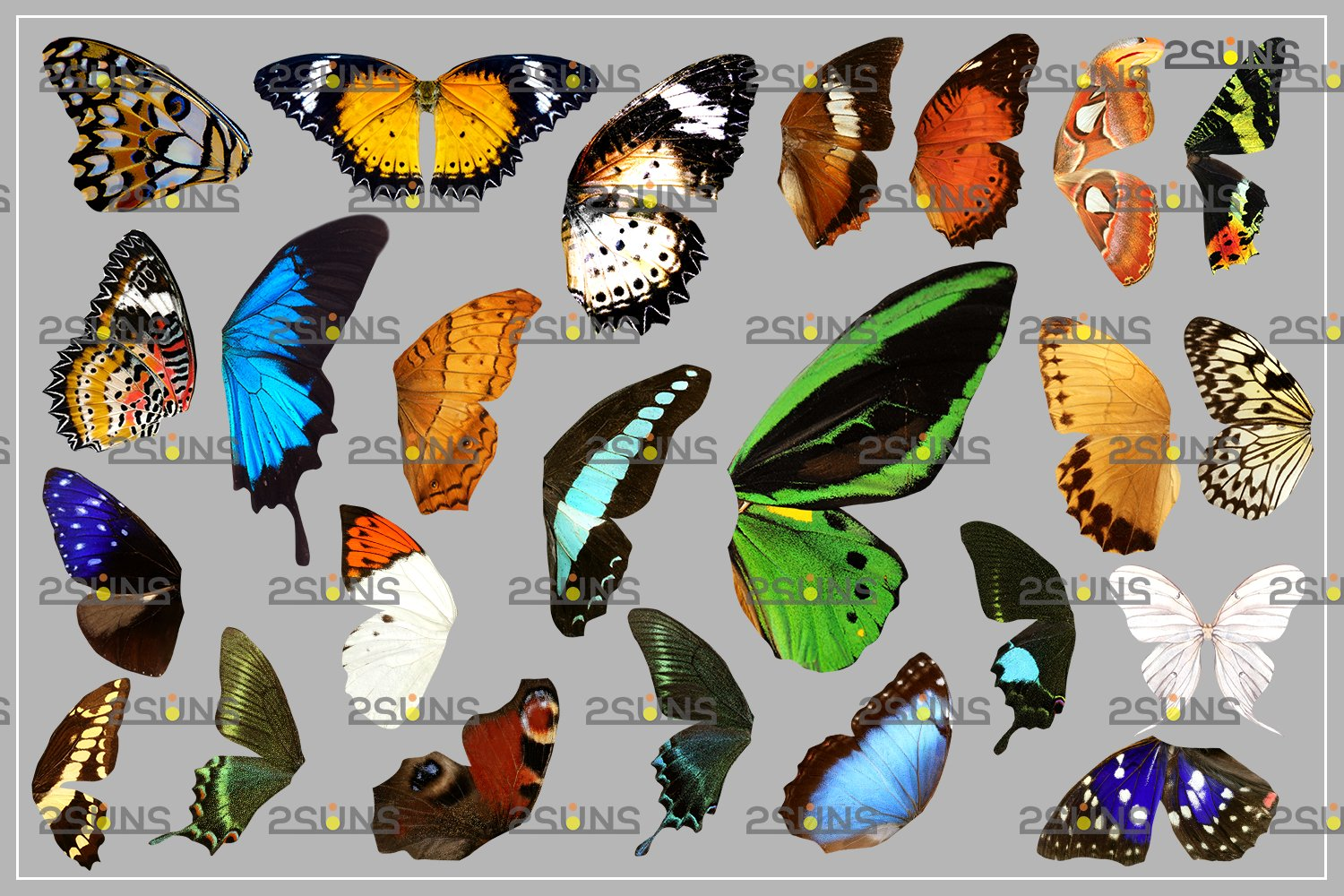 Colorful Butterfly Wings Photoshop Overlay example image 7