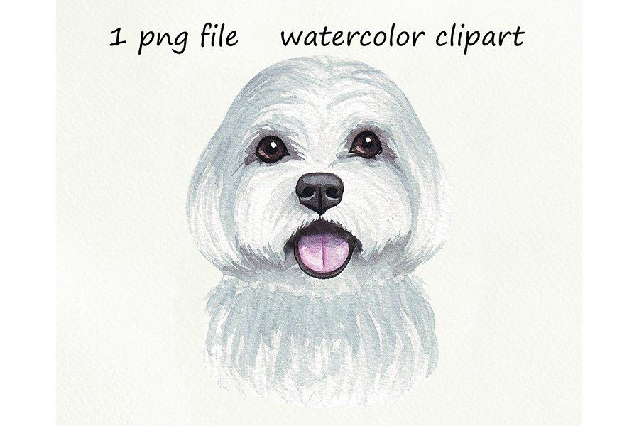 Watercolor dog png, Maltese dog, hand drawn example image 1