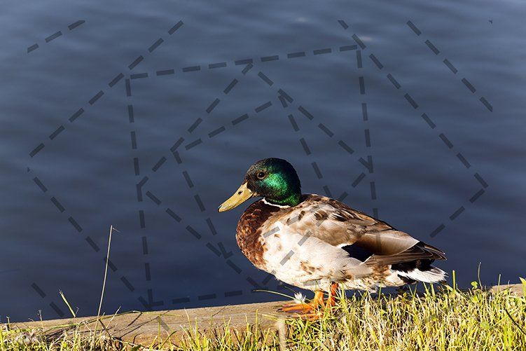 duck on the birch example image 1