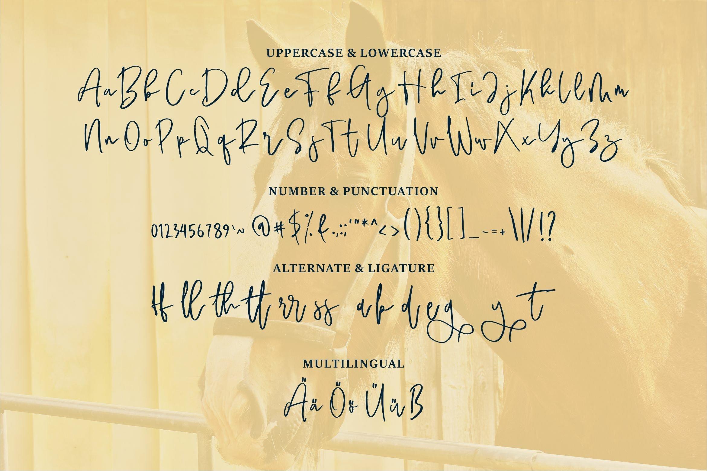 Geyala - Brush Script Font example image 6