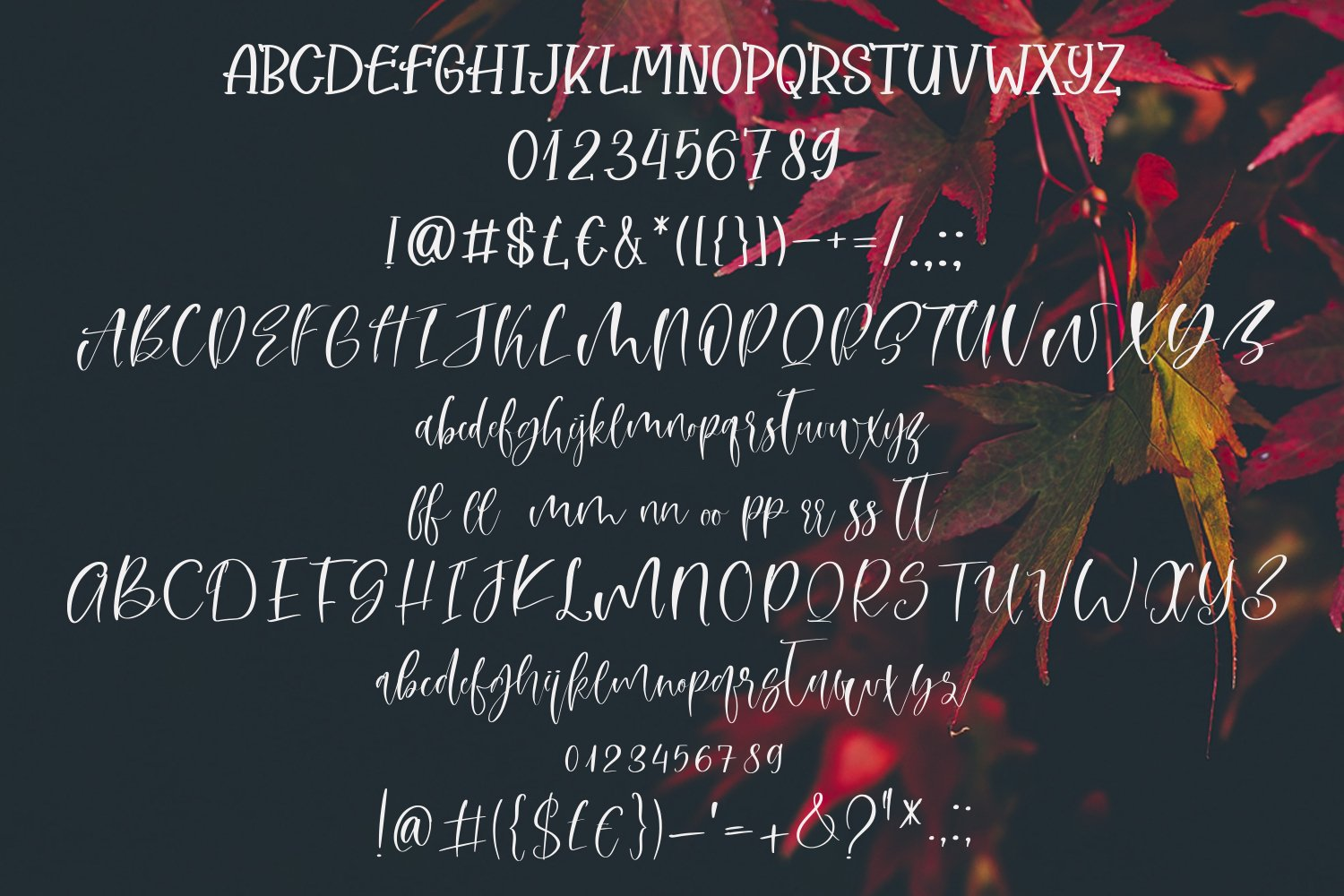 Autumn Dreams Font Duo example image 5