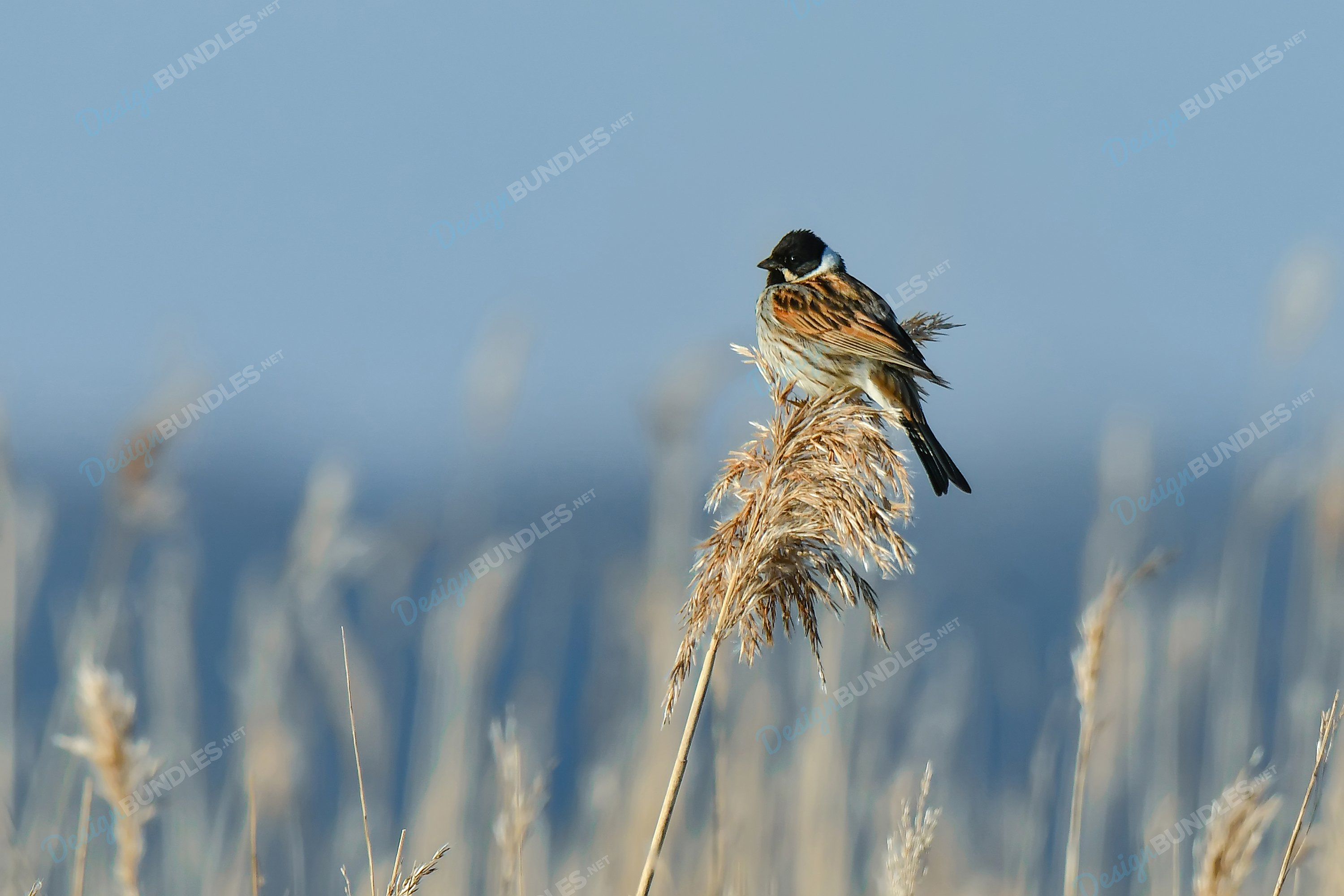 Stock Photo - The bird stands on the leaves example image 1