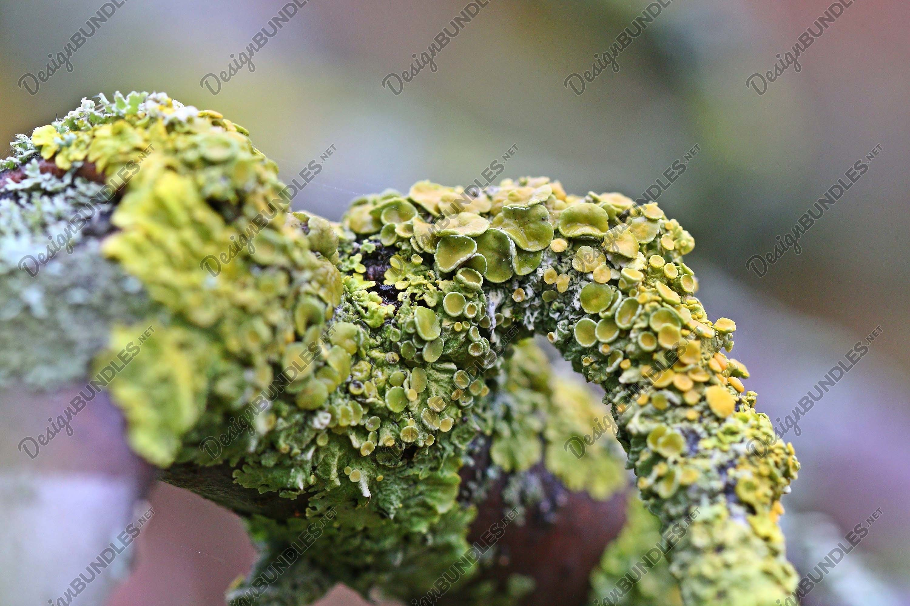 Stock Photo - Close-Up Of Moss On Logs example image 1