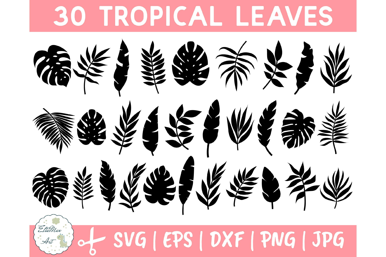 Tropical Leaves Svg Bundle Palm Leaves Svg Jungle Leaves 645842 Illustrations Design Bundles Free svg image & icon. tropical leaves svg bundle palm leaves svg jungle leaves