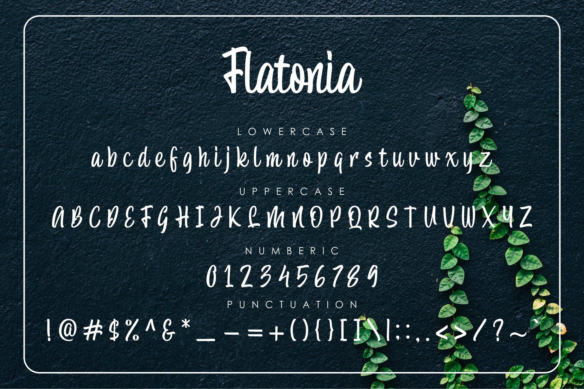 Flatonia example image 9