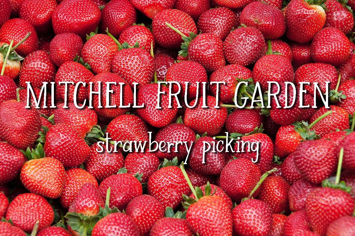 Strawberry Farm | A Serif Font example image 6