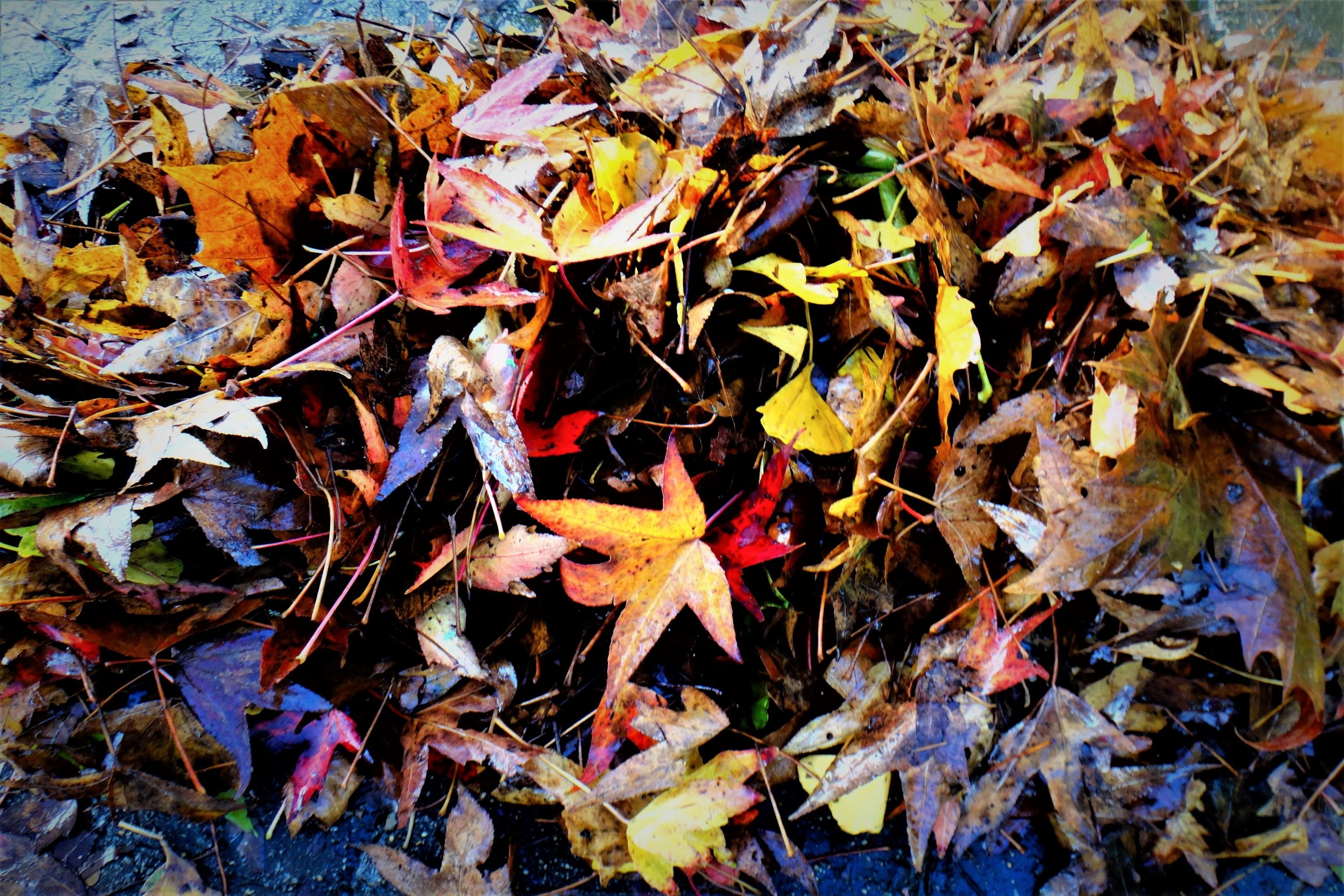 Colourful autumn pictures from Europe example image 1